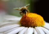 6 facts about our precious bees