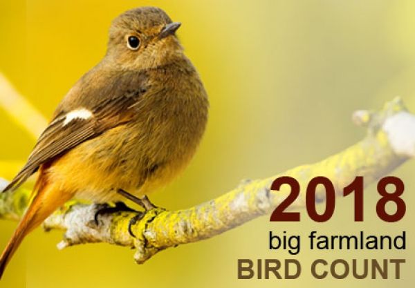 2018 big farmland bird count