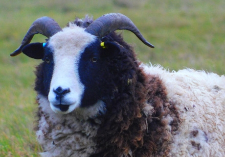 From field to bed. The transformation of a fleece