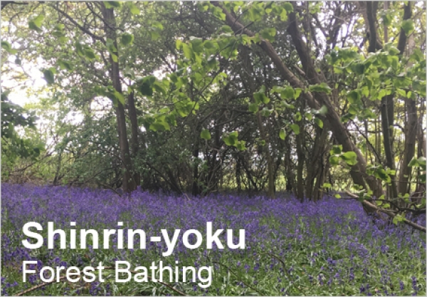 Shinrin-yoku: Forest Bathing